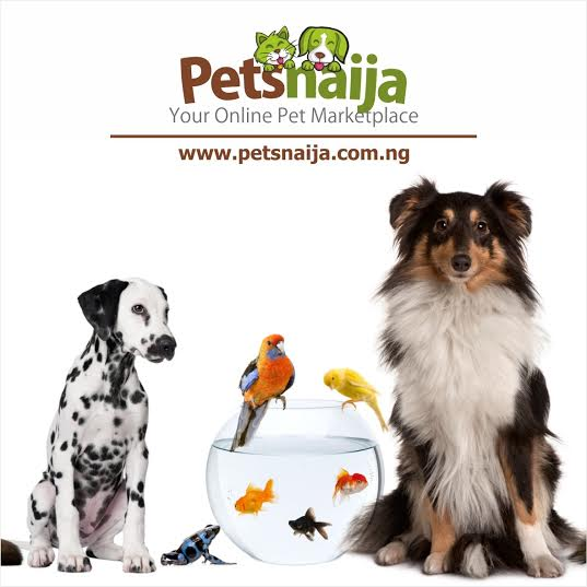 Online Shopping platform for Dog Lovers Opens Petsnaija