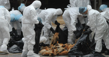 Bird Flu destroys 22,000 birds in Plateau State