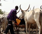 Fed Govt gazettes 141 grazing reserves for ranches